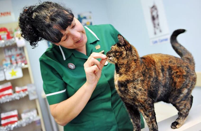 A cat receives a little reward to a successful health check at Calder