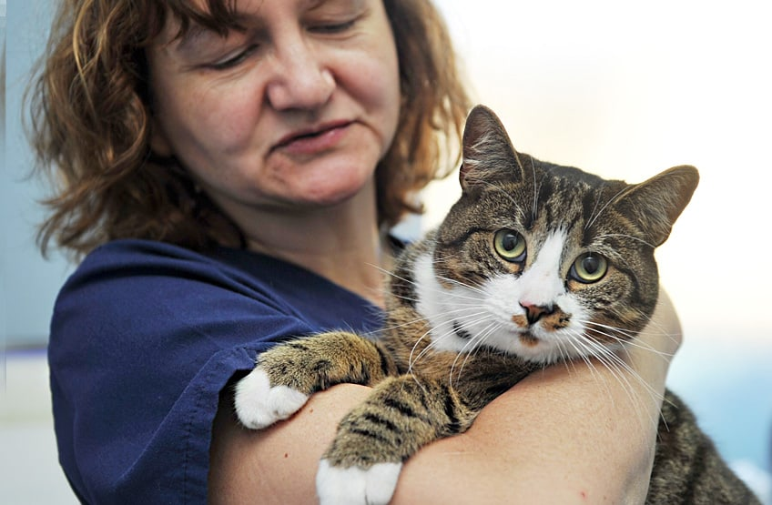 facts about neutering cats