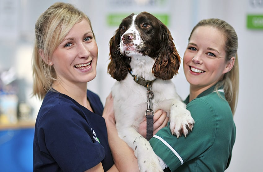 Your hospitalised pets are always well looked after by our staff