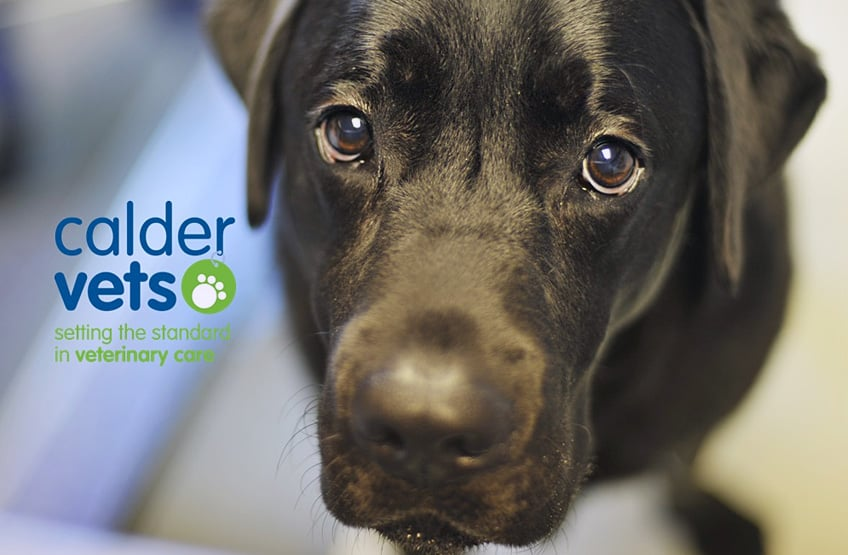 calder vets advice how to choose dog kennels