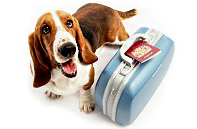Taking Your Pet Abroad - Pet Travel Scheme