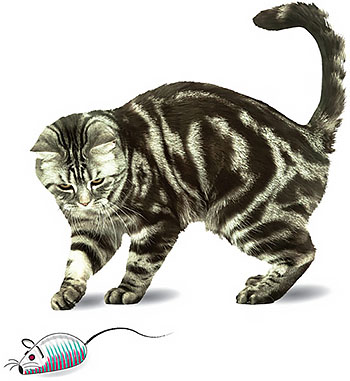 Calder Pet Health Club - Cat with a mouse