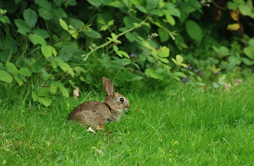 your rabbit diet advice from calder vets