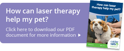 How can laser therapy help my pet?