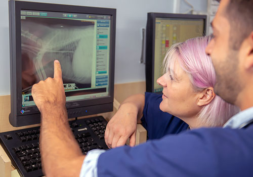 Various X-Ray facilities available at Calder Vets
