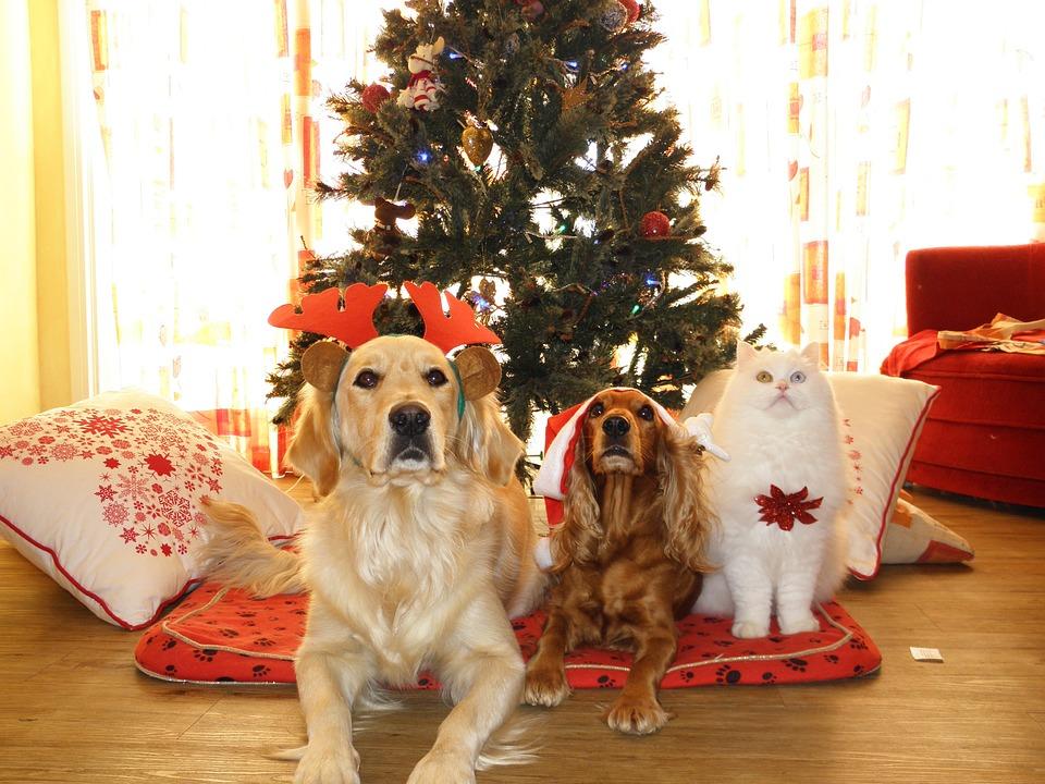 festive pet care