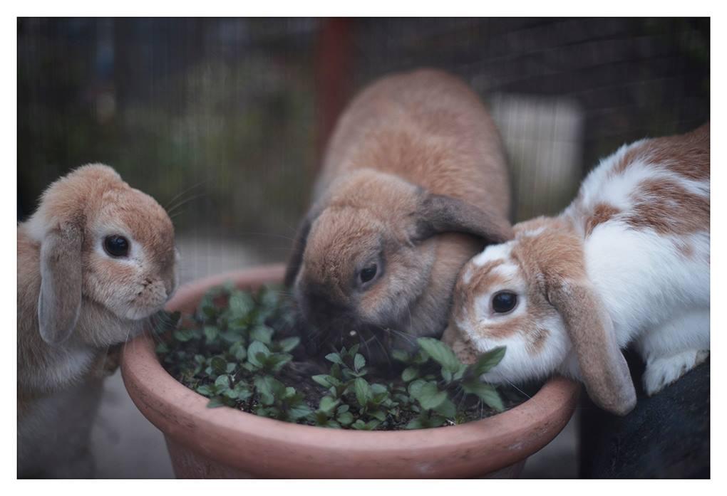 Rabbit Awareness Week at Calder Vets