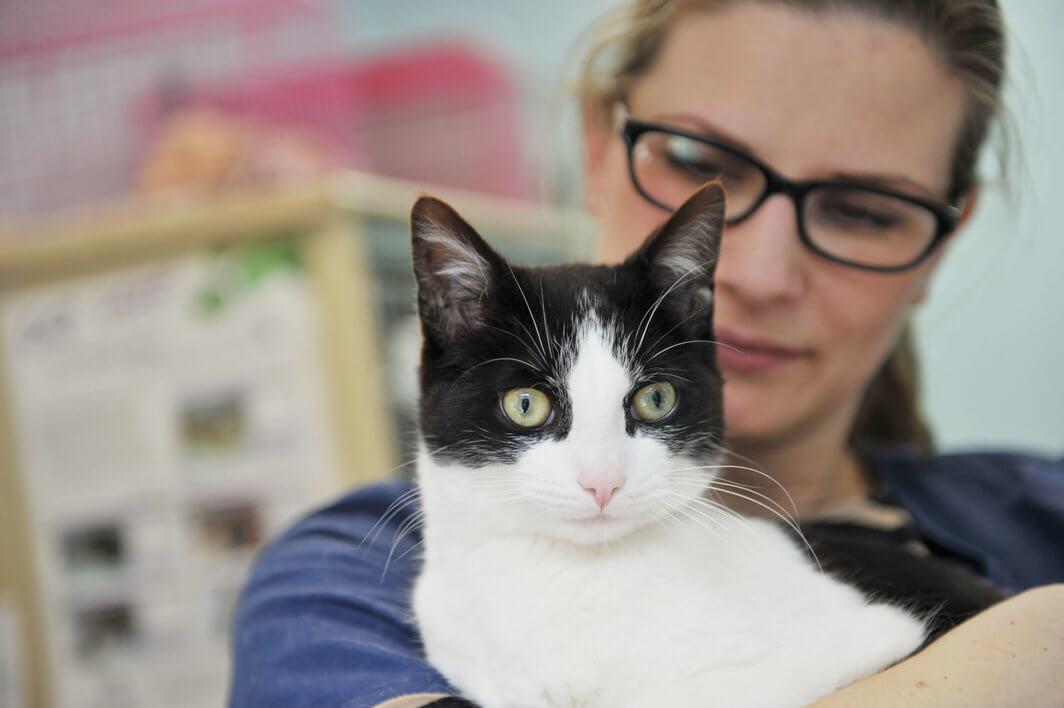 Calder Vets Cat Care