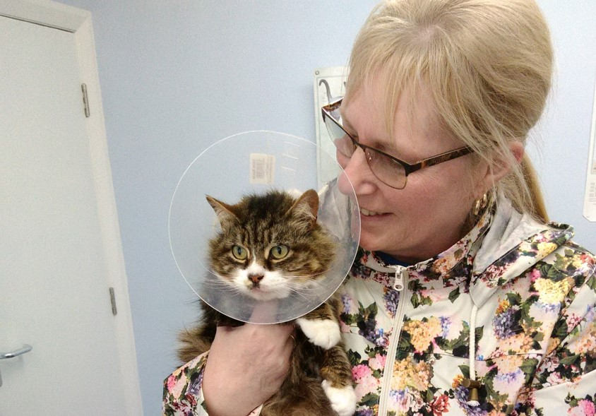 Little bit of luck as missing cat returns after nearly three years