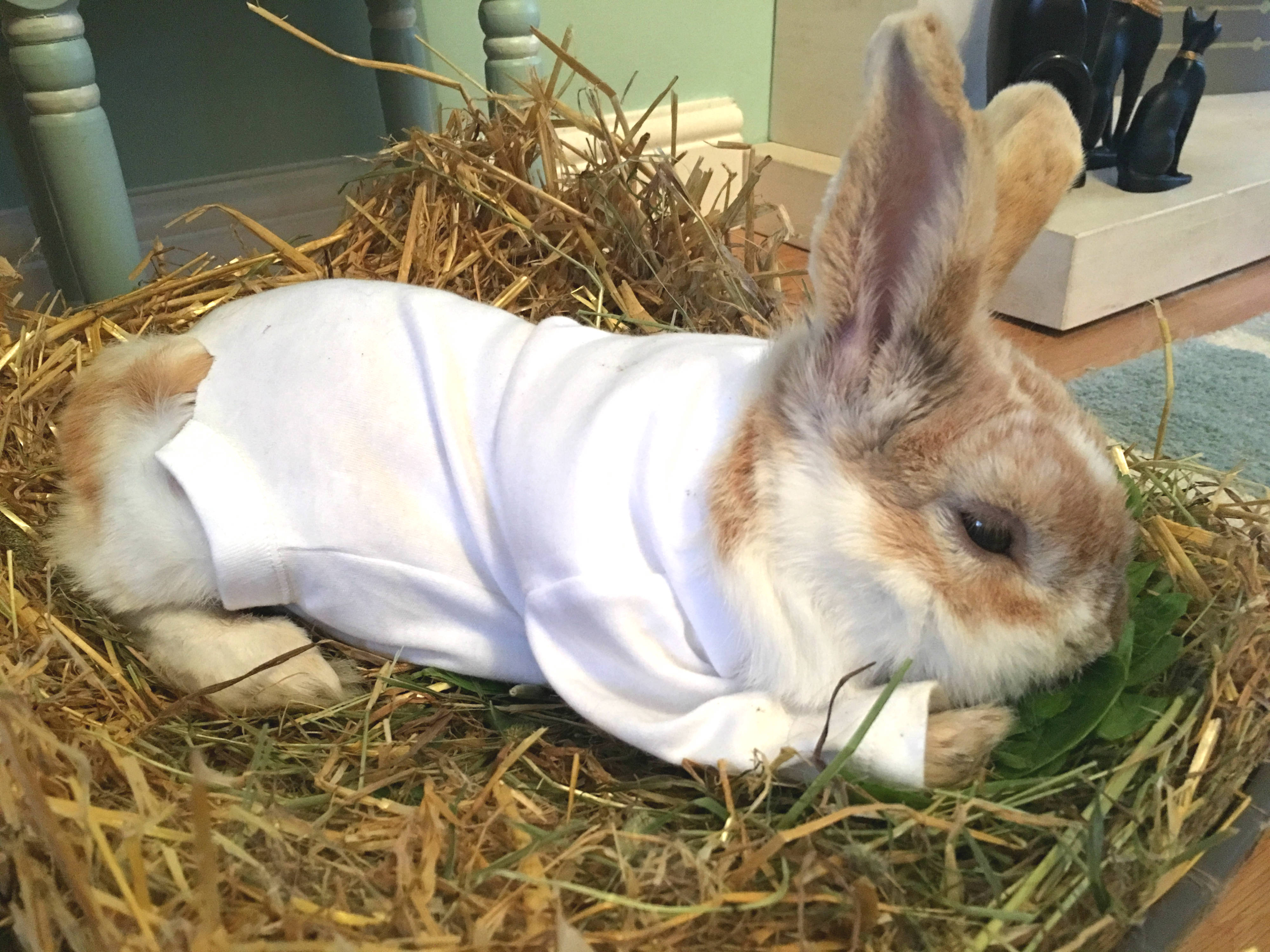 Burgess the rabbit