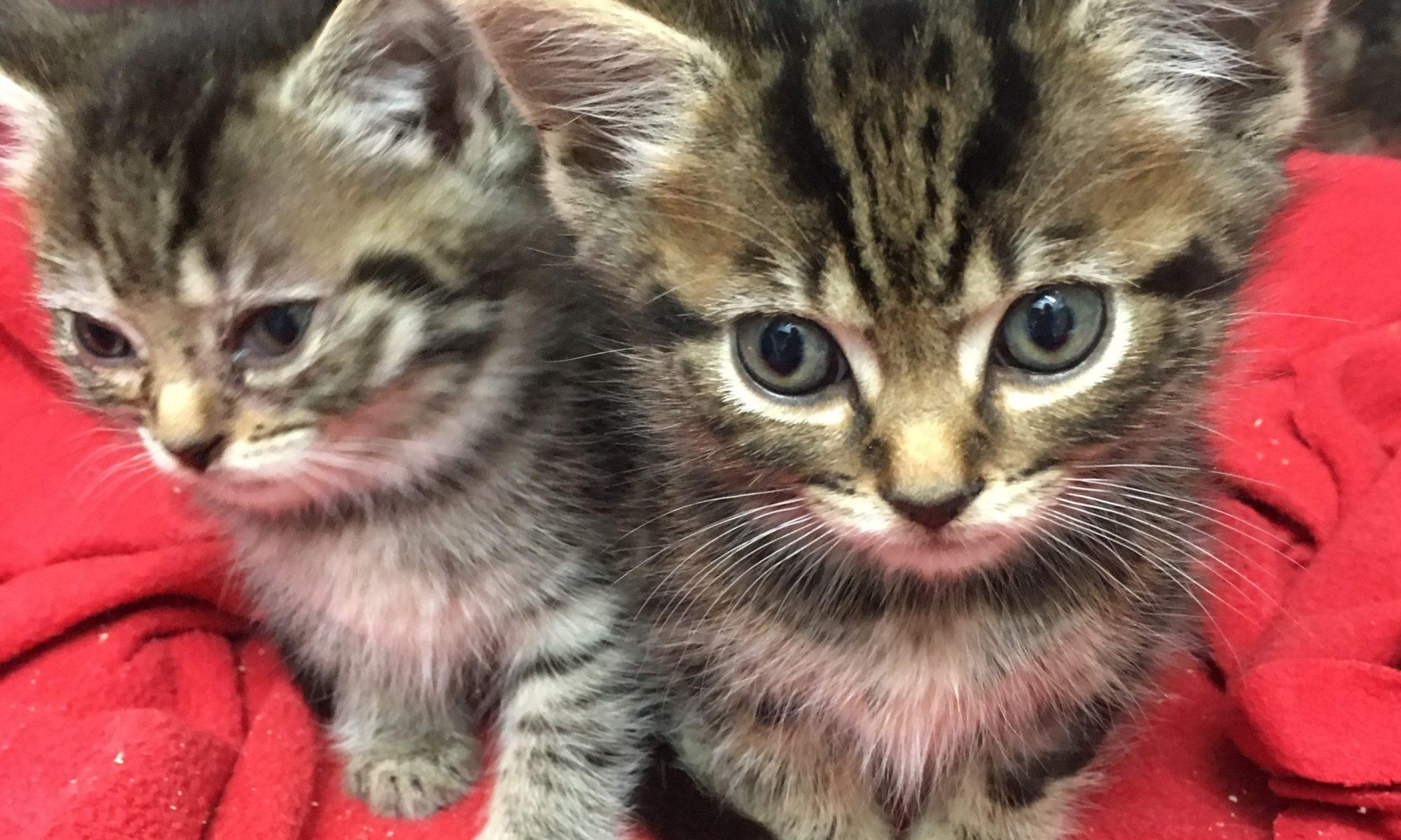 Dewsbury vets in plea over cat neutering