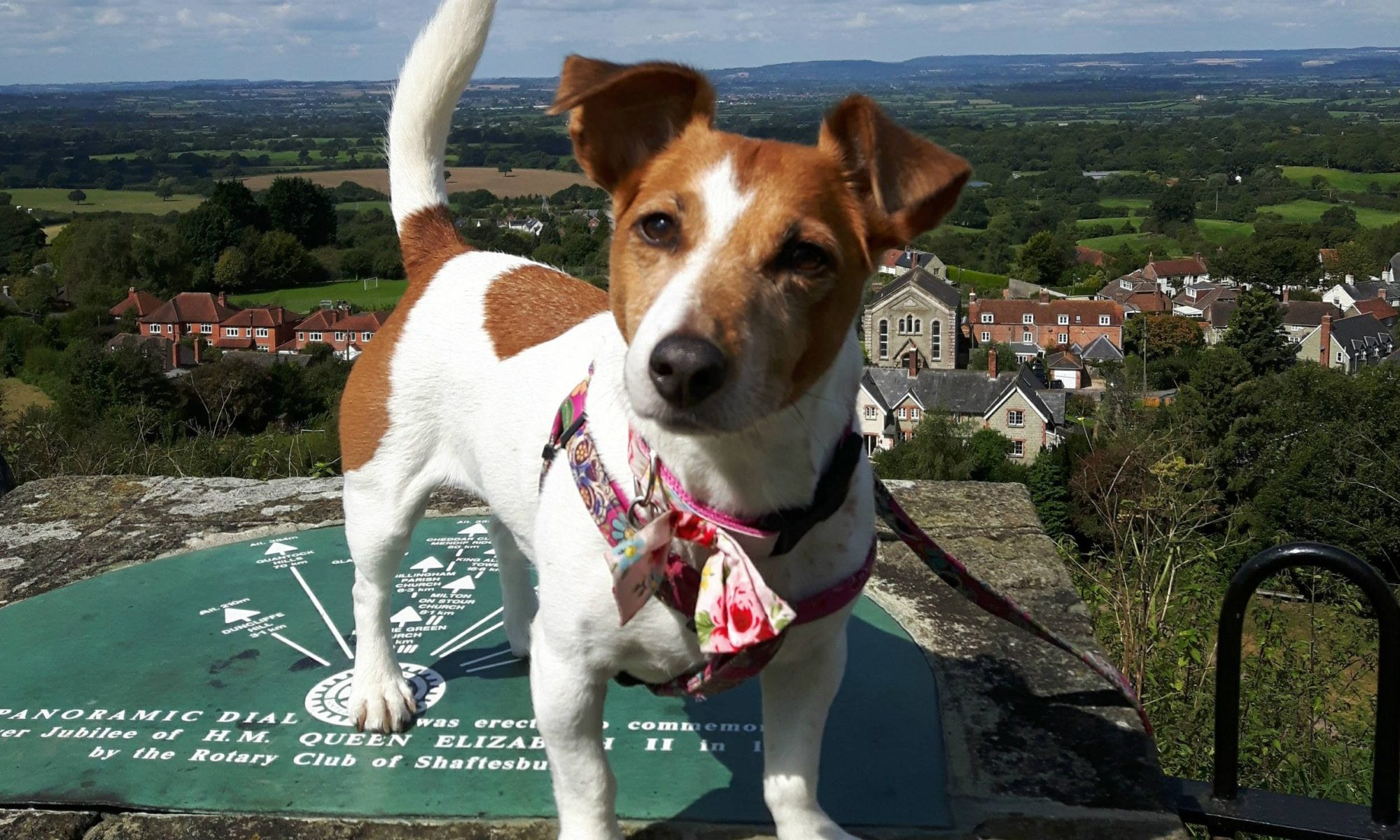 Jess the Jack Russell - Calder Vets