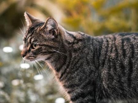cat-calder-vets