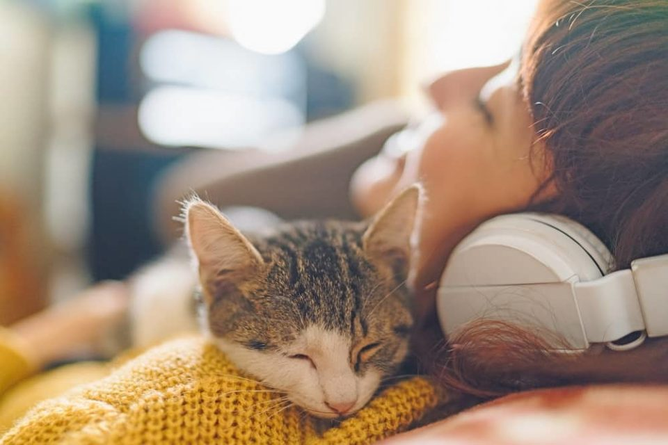 Happiness day-cat and owner